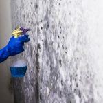 dezinfekční odstranění plísně